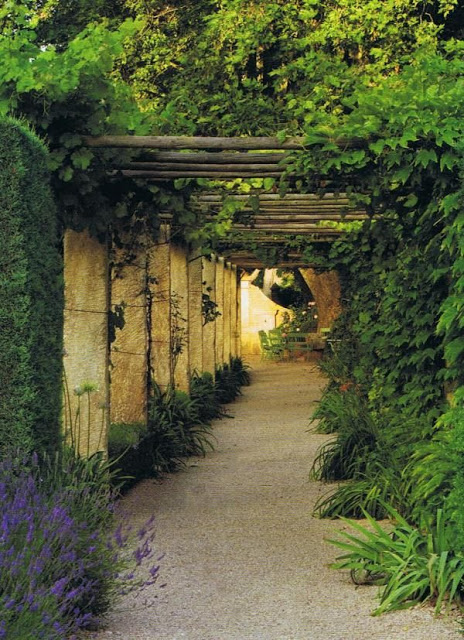 a passway of a pergola with ivy and lavender