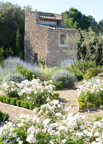 provencal garden with flowers and lavender